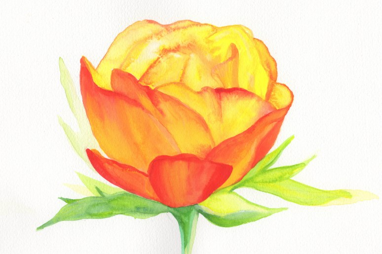 Orange Flower Watercolour