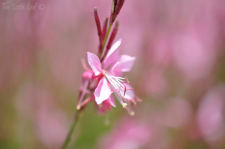 Pink Flower Photography (1)