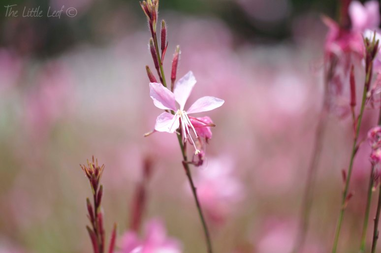 Pink Flower Photography (2)